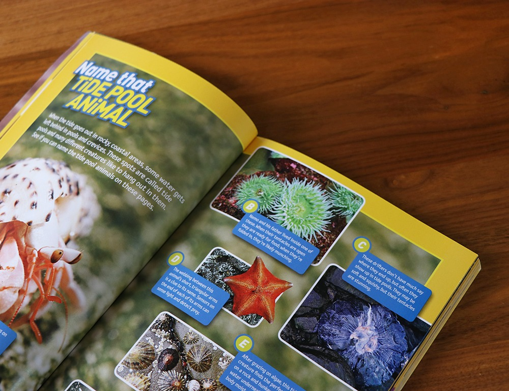 National Geographic Name that Tide Pool Animal Kids Guide Design